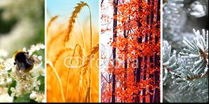pory_roku_tematyczne